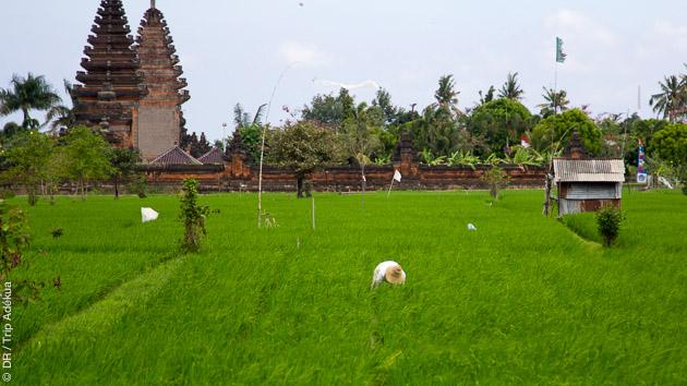 Savourez la douceur de vivre sur l'île de Bali en Indonésie