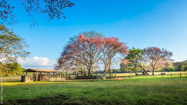Profitez de la nature luxuriante du Costa Rica