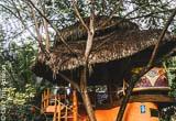 Des nuits au cœur de la luxuriante végétation équatorienne - voyages adékua