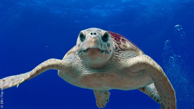 Snorkeling à la découverte des fonds marins des Grenadines