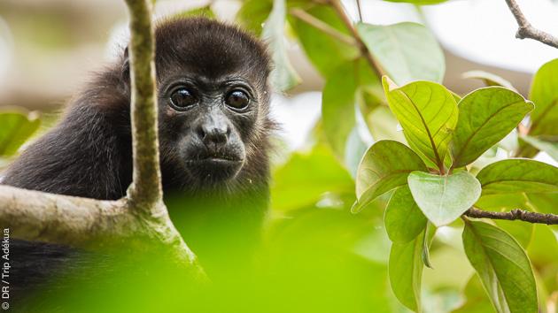 Profitez de la biodiversité préservée du Costa Rica